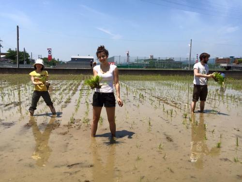 巨椋池の田んぼでの田植え体験